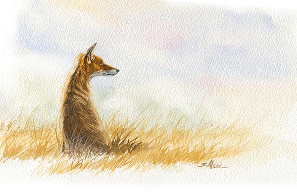 aquarelle d'un renard au petit matin