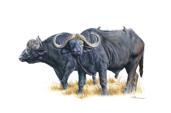 wildlife painting buffalo