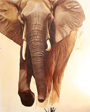 elephant-22300