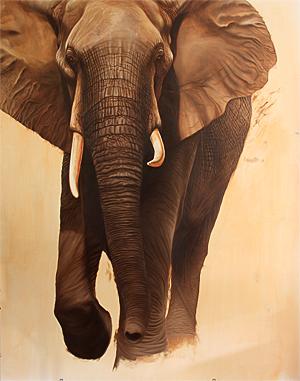 elephant-26300