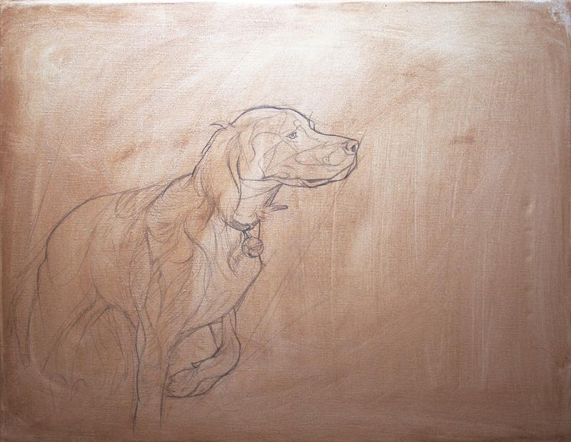 portrait d'un setter à l'arret, dessin préliminaire