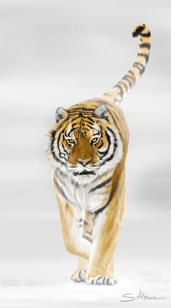 Digital painting : Tiger