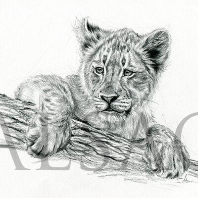 dessin-lionceau-bebe-felin-art