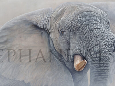 elephant-painting-high-and-mighty
