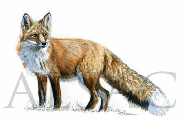 fox-painting-european-wildlife-art