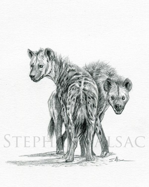 hyenas-sketch