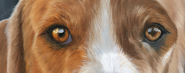 detail painting foxhound