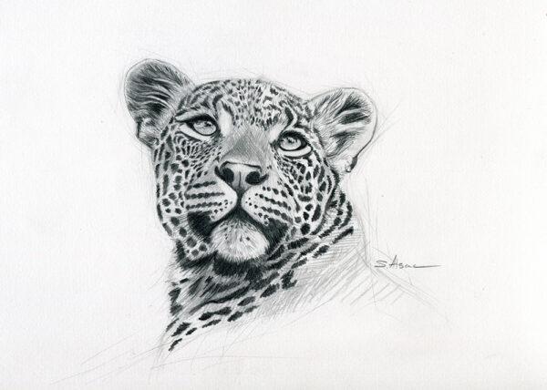 leopard-dessin-croquis-art-realiste