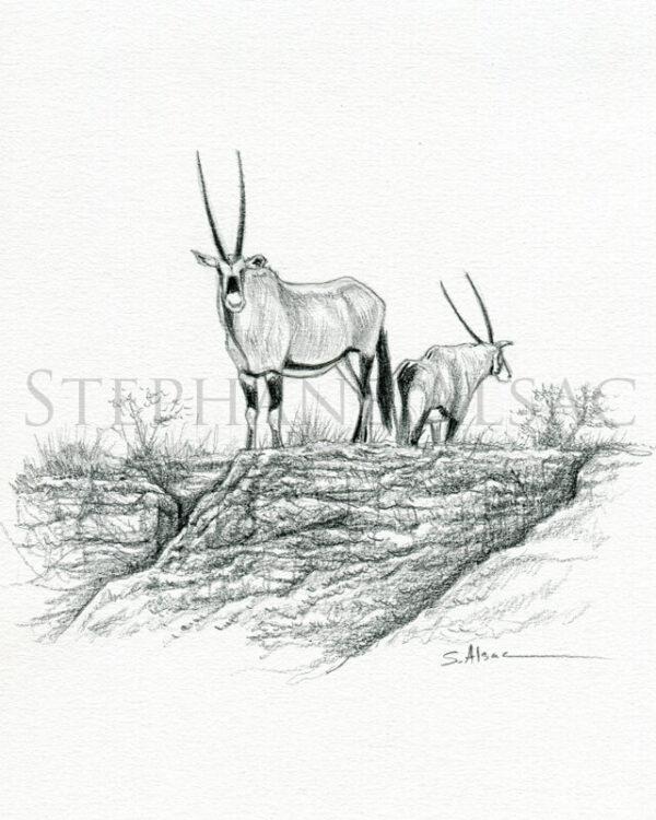 oryx-sketch