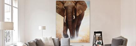 digigraphie elephant certifiée