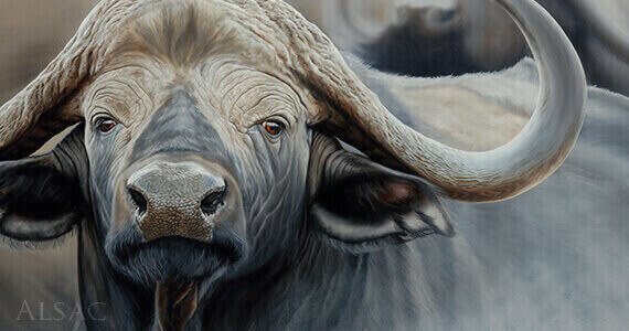 portrait-cape-buffalo-painting