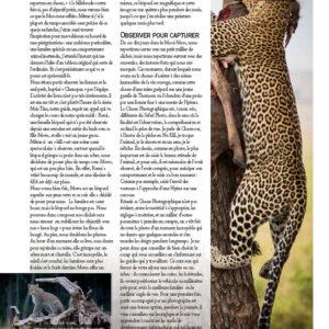 safari-photo-afrique-leopard-kenya