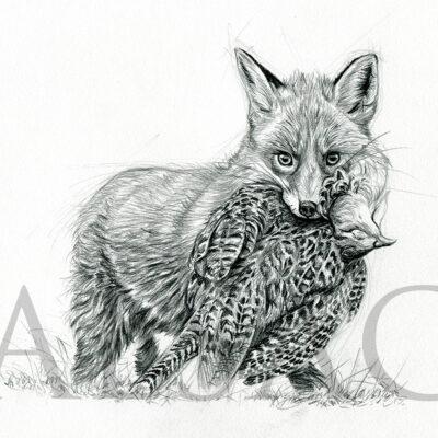 sketch-drawing-fox-pheasant-hunt