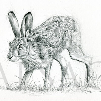 sketch-hare-hunting-rabbit