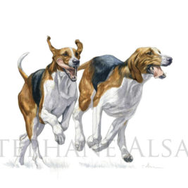 foxhound watercolor painting