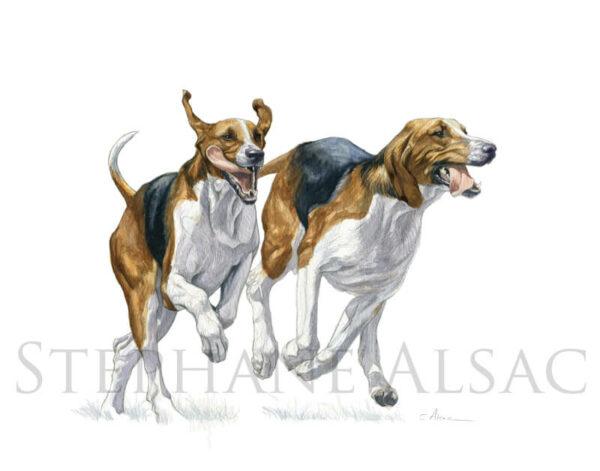 vloo-aquarelle-chien-venerie