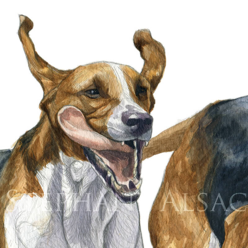 foxhound watercolor painting detail