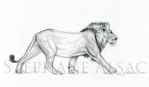 walking-lion-sketch