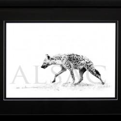 wildlife-photo-B&W-hyena-africa