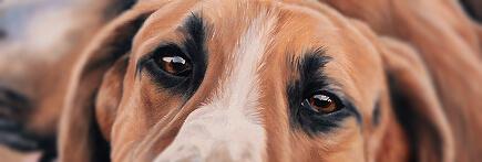 peinture chien venerie