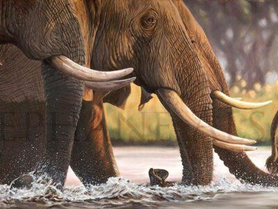Elephants-Crossing-painting-LR