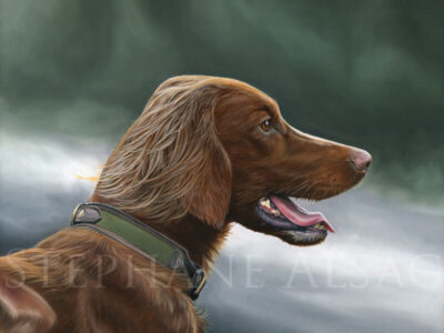 Irish-setter-portrait-painting