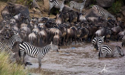 Safari-kenya-crossing-migration