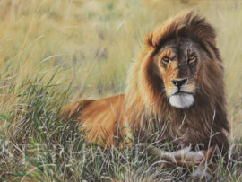peinture Lion - Sunset Guardian