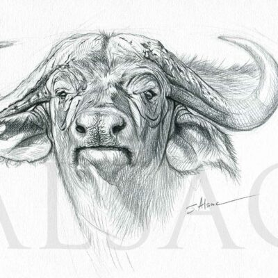 animal-art-drawing-cape-buffalo