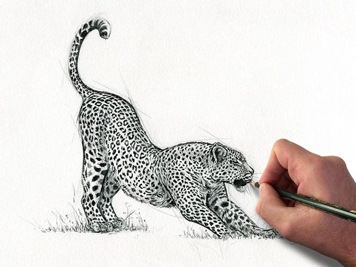 Apres Une Grosse Sieste Le Leopard S Etire Dessin A La Mine De Plomb Si Vous Stephane Alsac