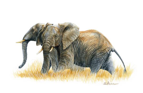 peinture elephants