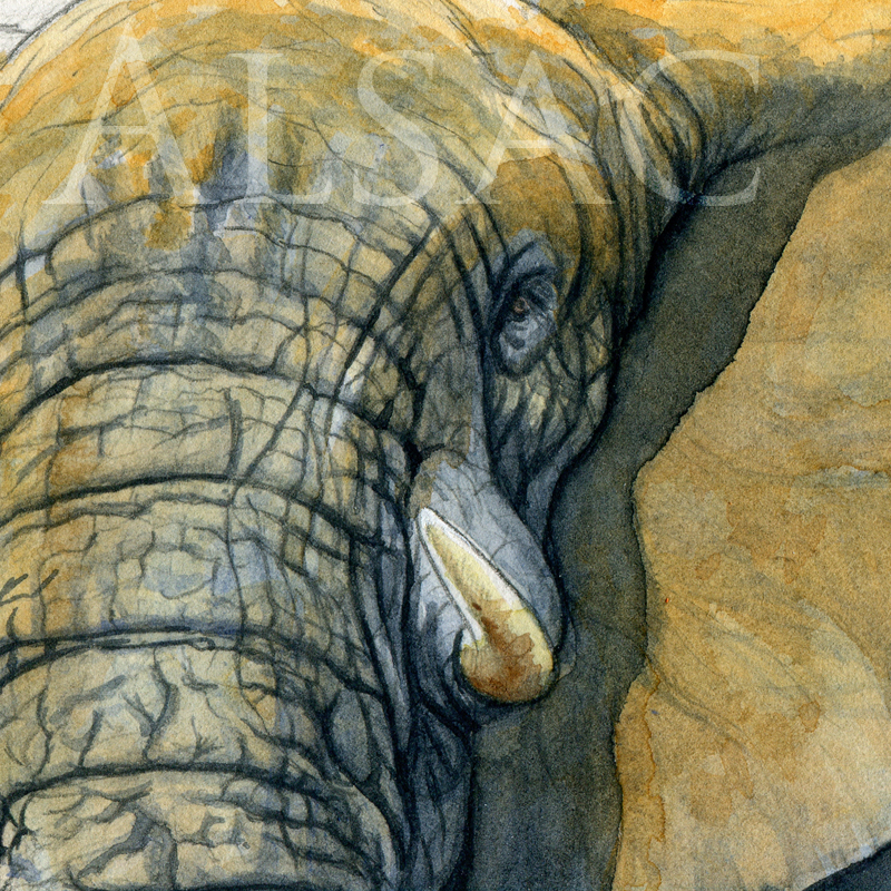 big-daddy-aquarelle-elephant-detail1