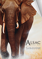 Catalogue Alsac Fine Art