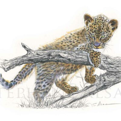 sketch-watercolor-small-leopard-art-wildlife