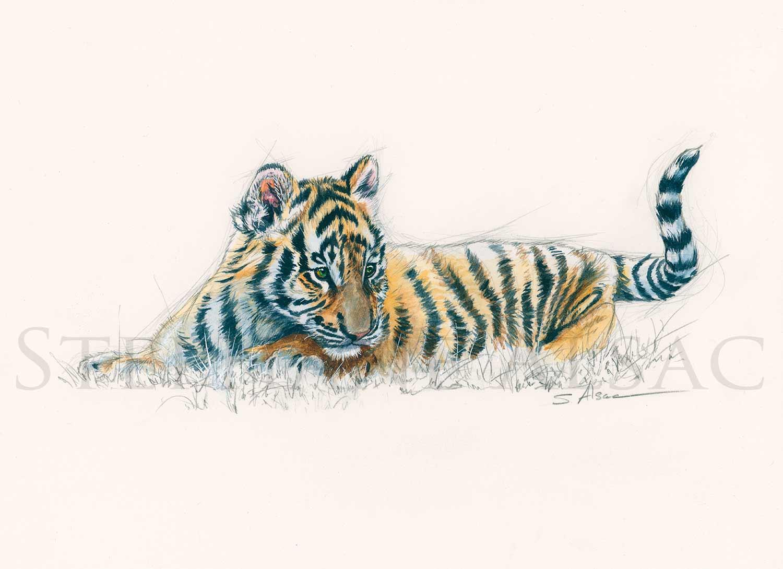 Tiger kid stéphane alsac