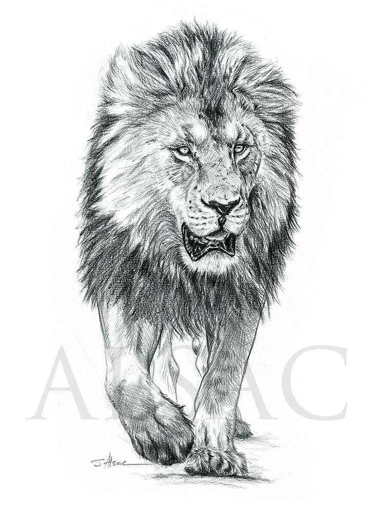 Lion Of Masai Mara Stephane Alsac