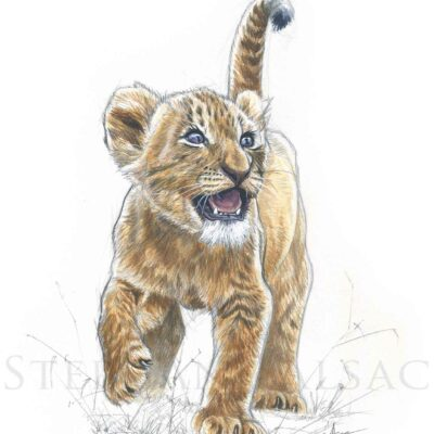 drawing-watercolor-lion-cub-wildife-art