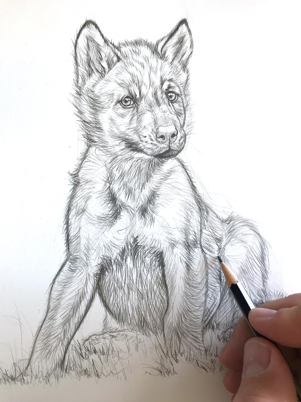 P Tit Loup