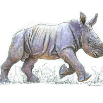 sketch-illustration-watercolor-baby-rhinoceros-wildlife-artist