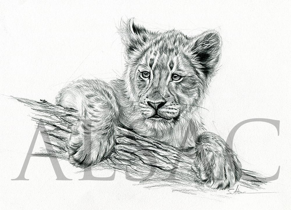 """""""Lion cub on a tree branch"""" - Stéphane Alsac"""