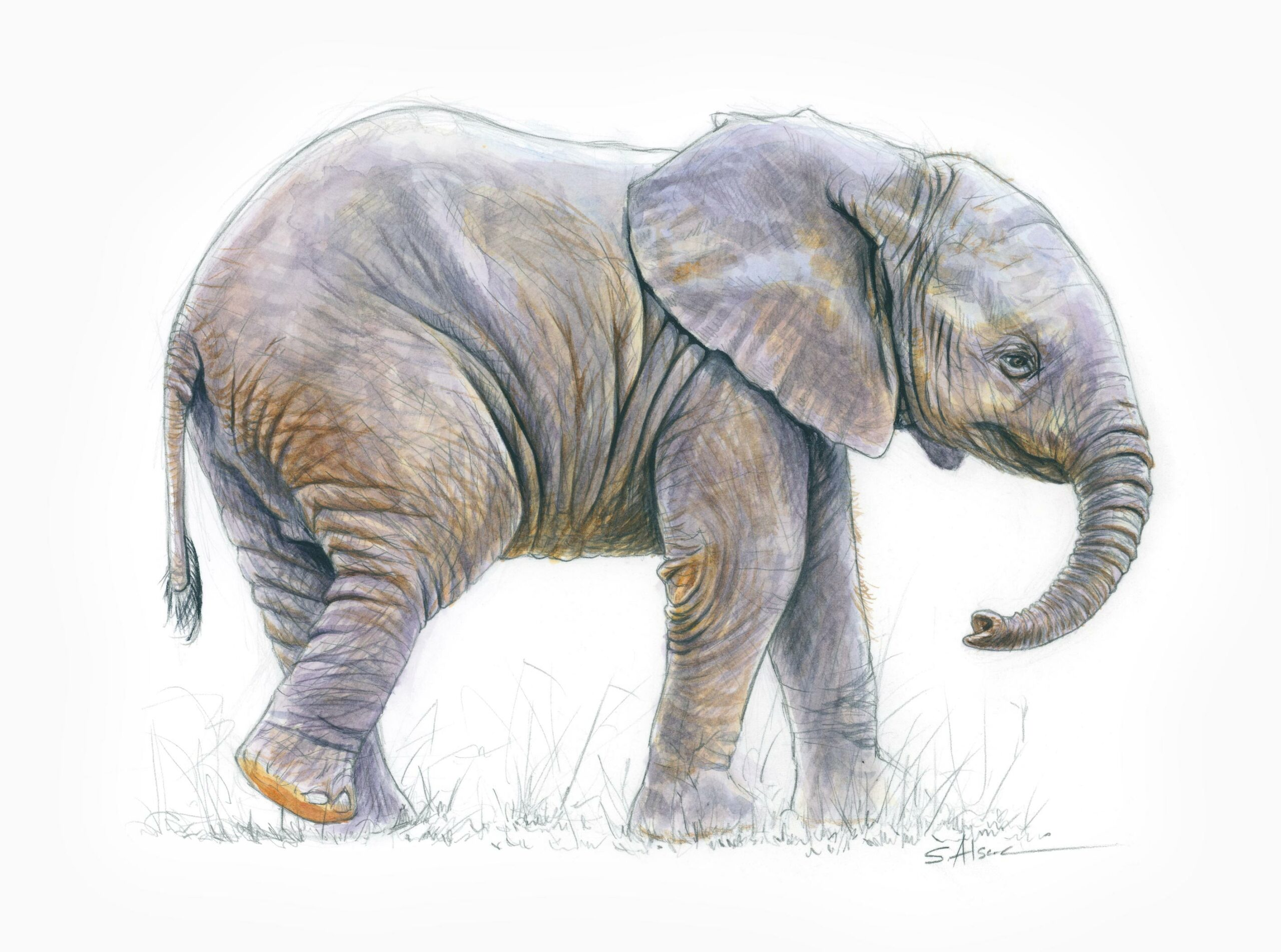 Stephane Alsac Artiste Animalier Wildlife Artist