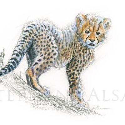 sketch-illustration-small-cheetah