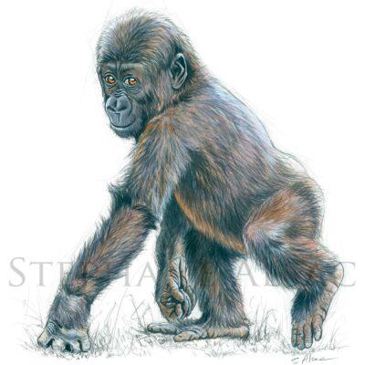 dessin-peinture-bebe-gorille-mignon-cadeau-enfant