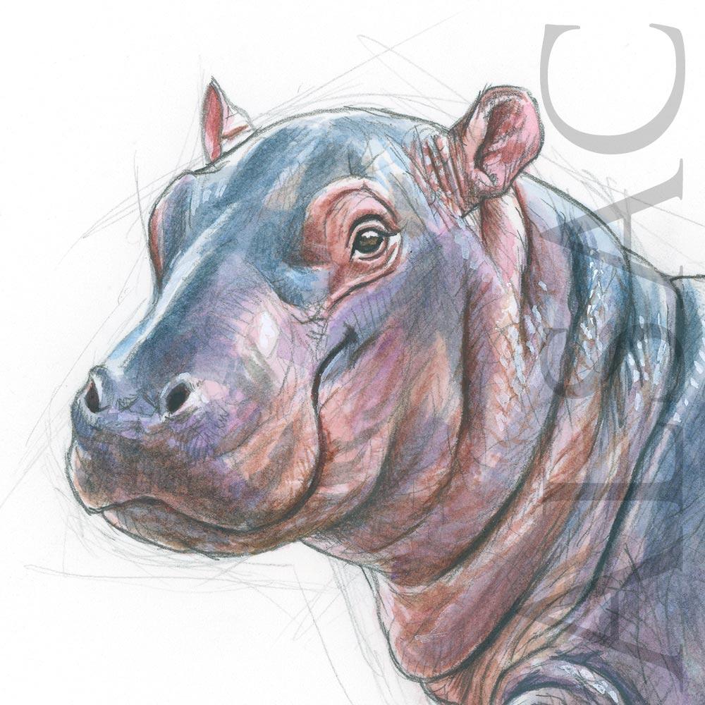 The Little Shop Peinture hippo kid