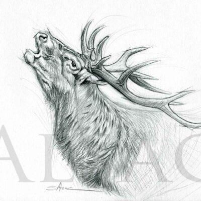 drawing-sketch-art-deer-stag