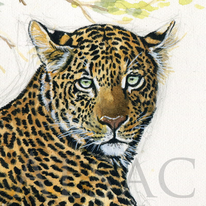 favorite-tree-painting-leopard-detail1