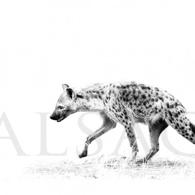 hyena-photography-Black-and-white-africa