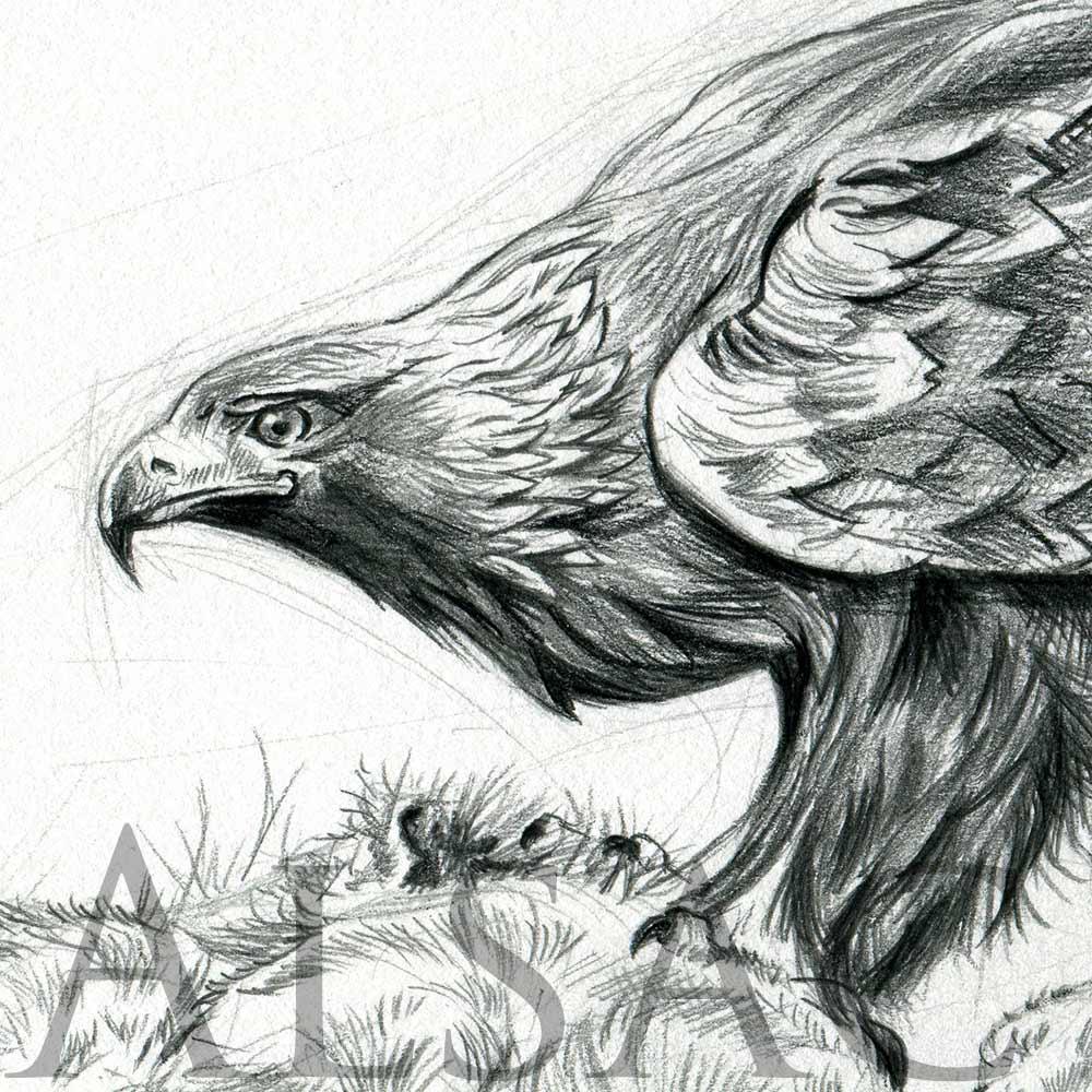 Illustration d 39 un aigle et sa proie st phane alsac - Dessin de aigle ...