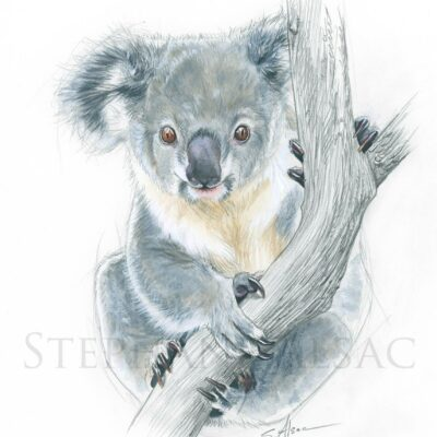painting-australian-small-animals-koala