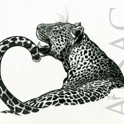 leopard-black-white-drawing-illustration
